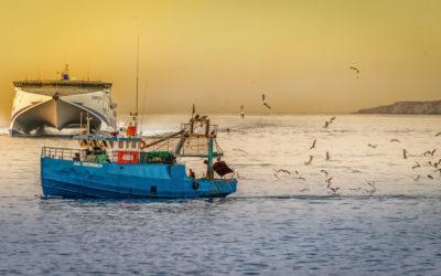 Wie viel Fisch ist eigentlich noch gesund?