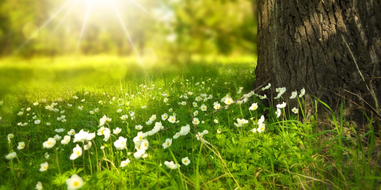 "Vitamin D: Das ""Sonnenvitamin"" unter Beschuss?"