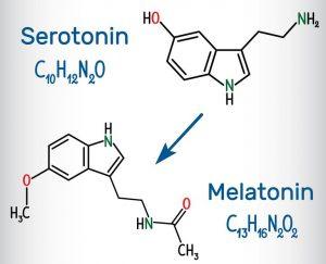 """Das """"Glückshormon"""" Serotonin wird zum """"Schlafhormon"""" Melatonin"""